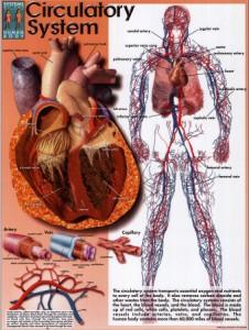 Symptoms Cholesterol